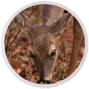 Portrait Of  Browsing Deer Two Round Beach Towel