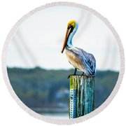 Round Beach Towel featuring the photograph Posing Pelican by Shannon Harrington