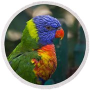 Posing Rainbow Lorikeet. Round Beach Towel