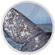 Round Beach Towel featuring the photograph Powerful Fluke by Don Schwartz