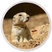 Prarie Dog Bee Alert Round Beach Towel