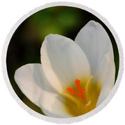 Pretty White Crocus Round Beach Towel