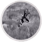 Round Beach Towel featuring the photograph Pronghorn  by Eric Tressler