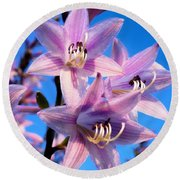 Round Beach Towel featuring the photograph Purple Hosta Blooms by Davandra Cribbie