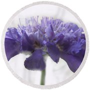 Round Beach Towel featuring the photograph Purple Pincushin by Debbie Portwood
