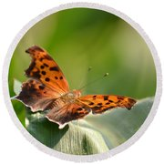 Round Beach Towel featuring the photograph Question Mark Butterfly by JD Grimes