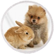 Rabbit With Pup Round Beach Towel