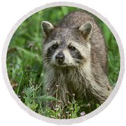 Round Beach Towel featuring the photograph Raccoon Looking For Lunch by Myrna Bradshaw