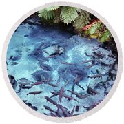 Round Beach Towel featuring the photograph Rainbow Springs by Mark Dodd