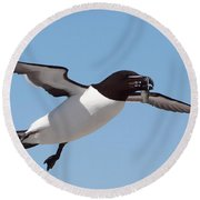 Razorbill In Flight Round Beach Towel