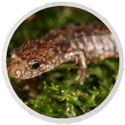 Red-backed Salamander Round Beach Towel by Ted Kinsman