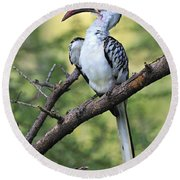 Red-billed Hornbill Round Beach Towel by Tony Beck