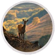 Red Deer Calf Round Beach Towel