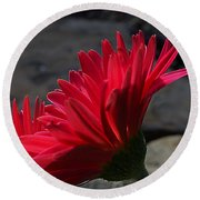 Round Beach Towel featuring the photograph Red English Daisy by Joe Schofield