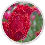 Red Fringed Tulip Flower Macro Art Prints Round Beach Towel