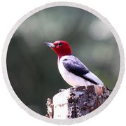 Red-headed Woodpecker - Statue Round Beach Towel