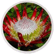 Red King Protea Round Beach Towel