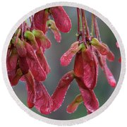 Red Maple Keys With Raindrops Round Beach Towel