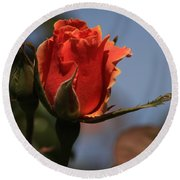 Red Rose Bud Vert Round Beach Towel