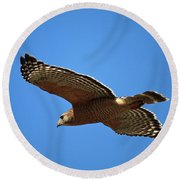 Red Shouldered Hawk In Flight Round Beach Towel