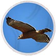 Red Shouldered Hawk In Flight Round Beach Towel by Carol Groenen