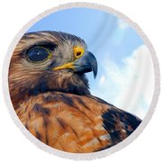 Round Beach Towel featuring the photograph Red Shouldered Hawk Portrait by Dan Friend