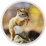 Red Squirrel Round Beach Towel by Elena Elisseeva