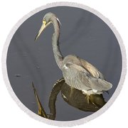 Reflection Round Beach Towel by Anne Rodkin