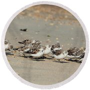 Resting Sandpipers Round Beach Towel