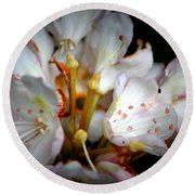 Rhododendron Explosion Round Beach Towel