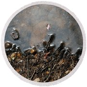 Round Beach Towel featuring the photograph Roots In Water by Kay Lovingood
