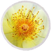 Rosa Golden Wings Round Beach Towel