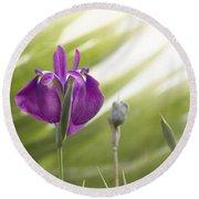 Purple Japanese Water Iris Round Beach Towel