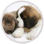 Saint Bernard Puppy With Rabbit Round Beach Towel