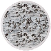 Round Beach Towel featuring the photograph Sandpipers In Flight by Dan Friend