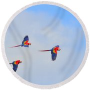 Scarlet Macaws Round Beach Towel by Tony Beck