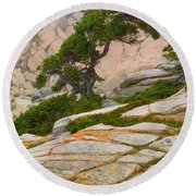Schoodic Cliffs Round Beach Towel by Brent L Ander