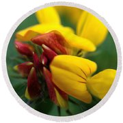 Scotch Broom Round Beach Towel