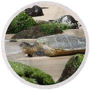 Sea Turtle 1 Round Beach Towel