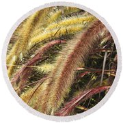 Setaria Italica Red Jewel - Red Bristle Grass Round Beach Towel by Anne Mott