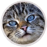 Siamese Feral Cat Round Beach Towel