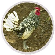 Silver Seabright Rooster Round Beach Towel