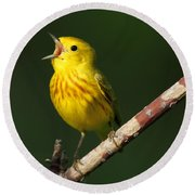 Singing Yellow Warbler Round Beach Towel