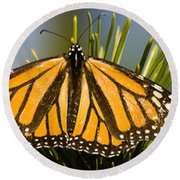 Single Monarch Butterfly Round Beach Towel by Darcy Michaelchuk