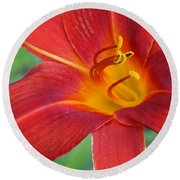 Single Red Lily Closeup Round Beach Towel