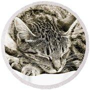 Sleeping Cat Round Beach Towel