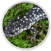 Slimy Salamander Round Beach Towel by Ted Kinsman
