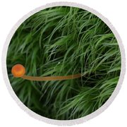 Small Orange Mushroom In Moss Round Beach Towel