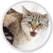 Snow Bengal-cross Cat Round Beach Towel