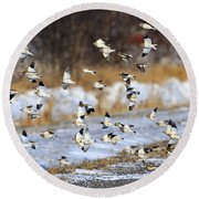 Snow Buntings Round Beach Towel by Tony Beck
